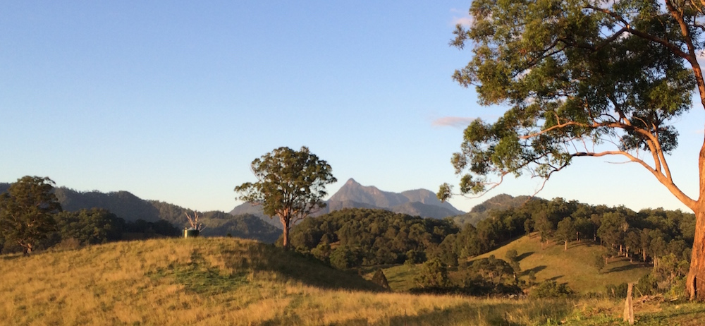 View from Wollumbin View B&B room